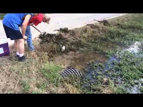 Catching Crawfish in Road Ditch