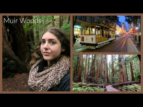 Muir Woods: My Last Day in San Francisco