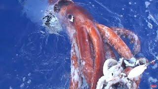 RAKSASA PENGUASA LAUTAN..!!! Makhluk Laut Terpanjang & Terbesar Di Dunia