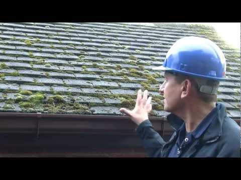 Removing Moss | Dalton Roofing