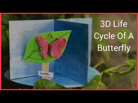 How To Make A 3D Model of Life Cycle Of A Butterfly