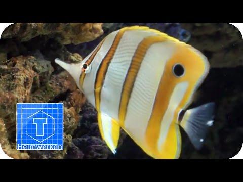 Tierpark-Safari: Aquarium | Tooltown
