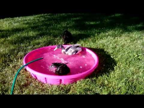 25. Splashing in the Pool