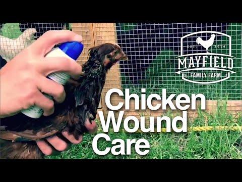 Chicken Wound Care