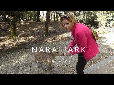 Japan, Nara - Nara park (2018)