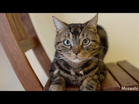 猫の並んだ抜け毛 Hair loss in cats are lined