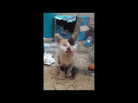Man Saves Blind and Deaf Kitten and Raises Her into Beautiful Cat