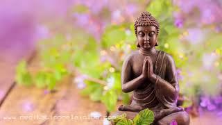 1 HOUR Buddhist Meditation Music: Lotus Blossom Atmosphere, Deep Relaxation