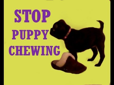 Puppy Chewing & Biting - Stop bad puppy behaviours with one cue!!!