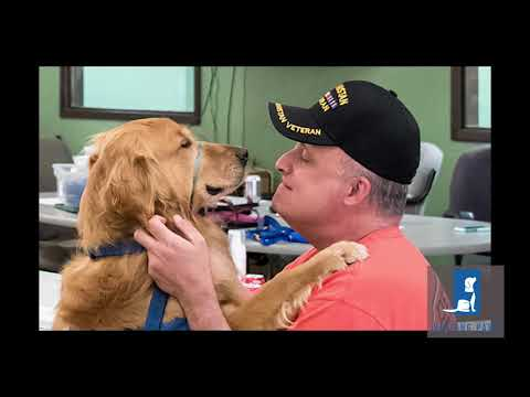 Helping Paws PTSD Service Dogs