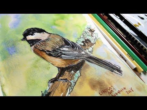 Chickadee in Ink, Watercolor & colored Pencil // Sketchbook Sunday