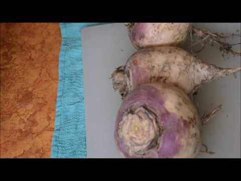 How To Peel Turnips The Easy Way
