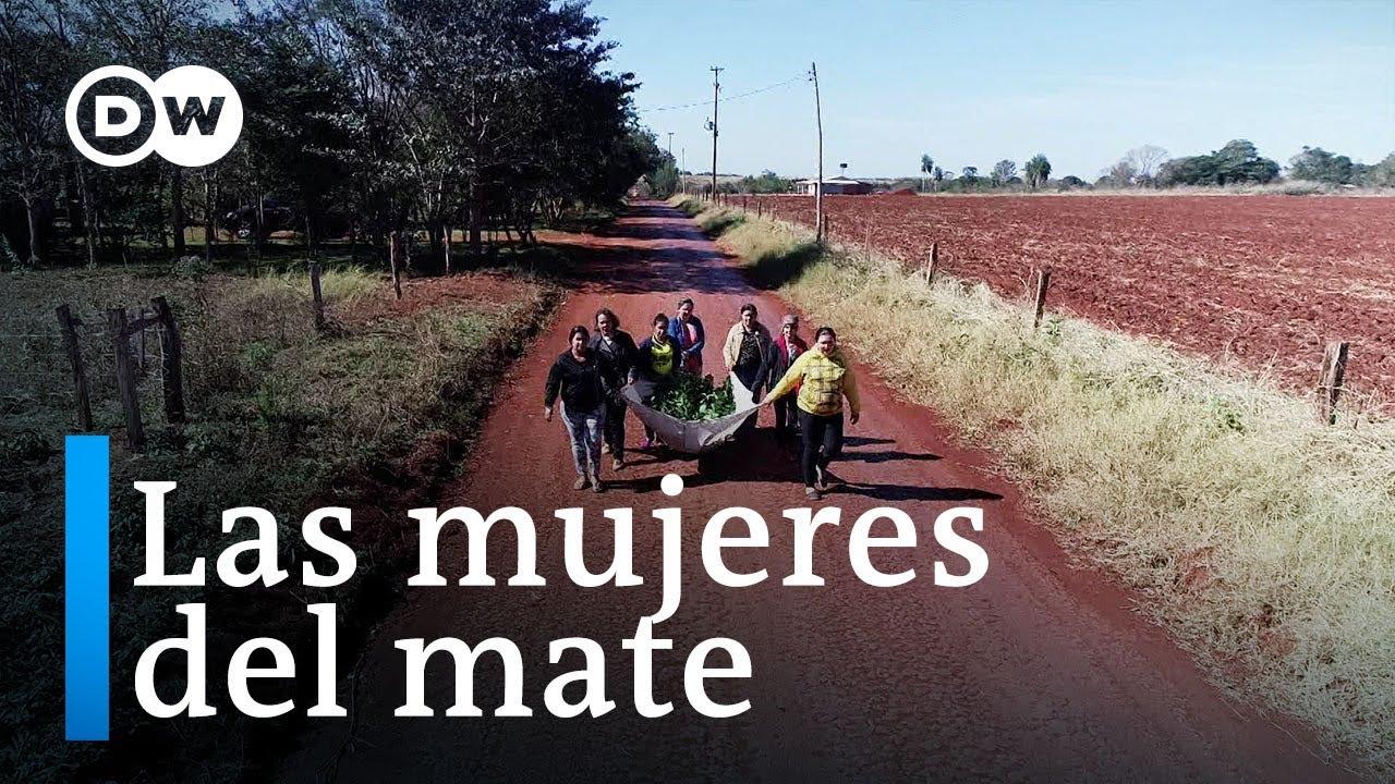 El cultivo del ka´a en Paraguay