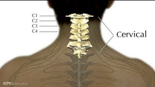 5A. Levels of Injury Explained - High Cervical - Spinal Cord Injury 101