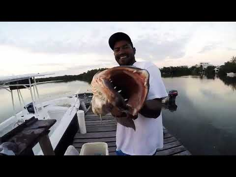 Belize san pedro spearfishing and lobster hunting