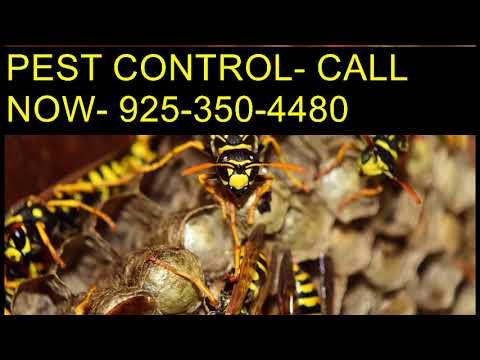 Dial 925 350 4480 Pest Control Rats Clovis CA