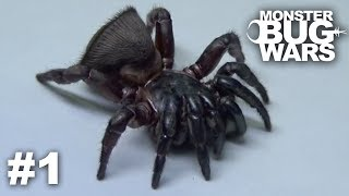 Try Not To Look Away (MONSTER BUG WARS Edition) #1