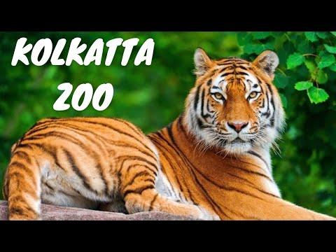Alipore Kolkata Zoo India *HD* Bengal Tiger Leopard Hippopotamus