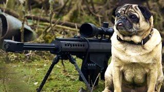 Sniper Pug