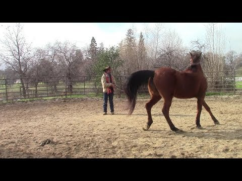 Solving Spooky Horse Behavior, Mike Hughes, Auburn California