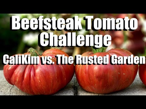 Beefsteak Tomato Challenge: Growing Large Tomatoes - Starting Seeds: CaliKim vs. The Rusted Garden
