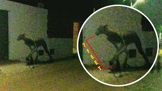 7 Mysterious Animals Ever Caught On Camera