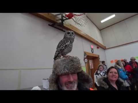 Dorset Snow Ball 2018 - Owl on my head