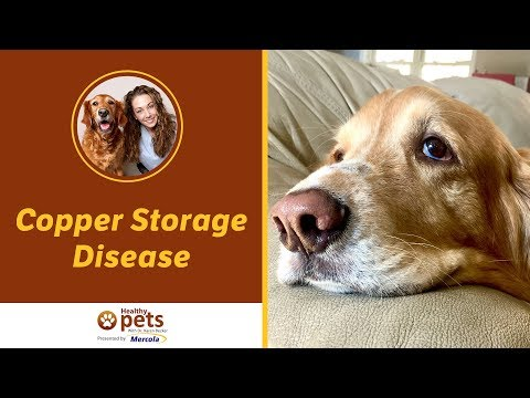 Dr. Becker Explains Copper Storage Disease