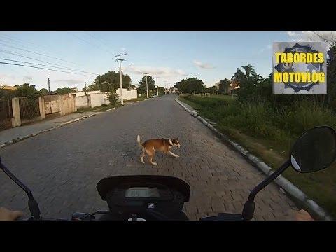 GoPro Motorcycle Crash Dog Accident - XRE 300 Pelotas Moto Honda GoPRO Tabordes