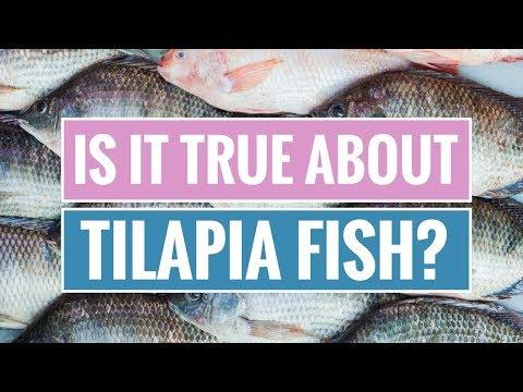 Tilapia Fish: Benefits and Dangers