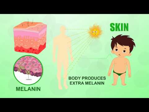 Skin - Human Body Parts - Pre School - Animated Videos For Kids