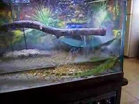 water dragon tank set up 2