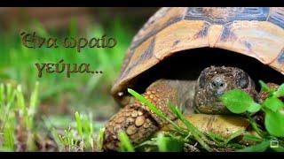 squirt της χελώνας μεγάλα βυζιά μαύρο έφηβος