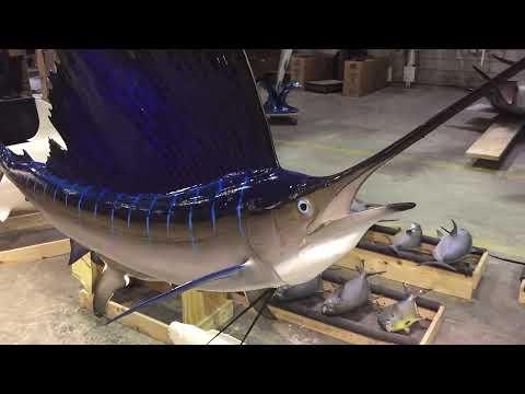 Gray Taxidermy Sailfish mount