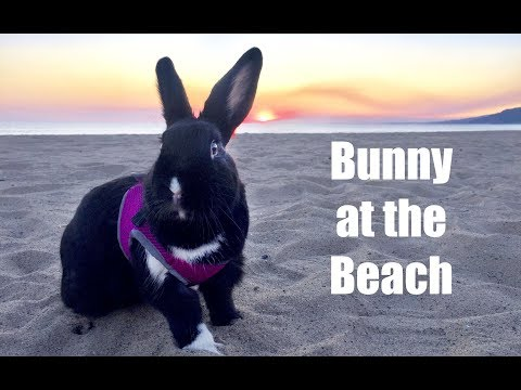 Rabbit Goes to the Beach!
