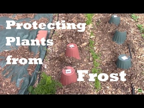 Frost Protection For Plants. How I Cover and Protect My Garden Plants From Frost.
