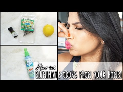 DIY: Make your house smell good! Eliminate home odors | Arshia's Makeup