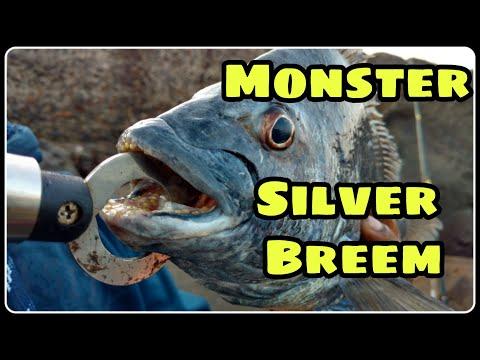 Fishing in India Mumbai...Silver bream...