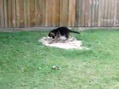 Stop your dog from digging up your lawn