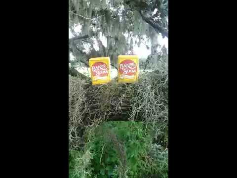 how to remove spanish moss