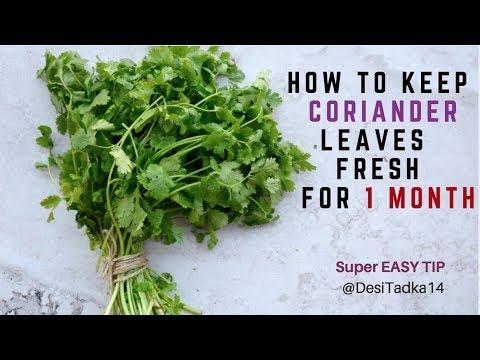 धनिया पत्ती को 1 महीने तक फ्रेश रखने का सबसे आसान तरीका How To Keep Coriander Leaves Fresh For Long
