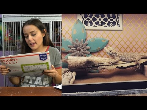 Bearded Dragon Cage Tour