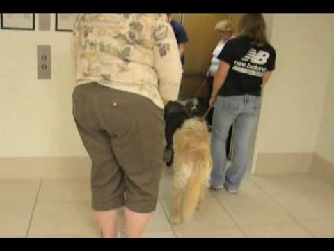 Lori's therapy dog training DVD(Instructional)