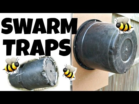 DIY SWARM TRAPS - trying to catch honey bees