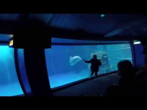 EPCOT Dolphins Show Walt Disney World