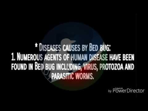 Bedbug borne diseases?