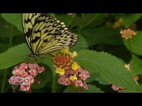 16x9 - Operation Butterfly: Botanical garden partnership