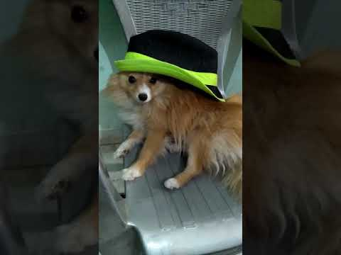 Cute doggy in beautiful hat