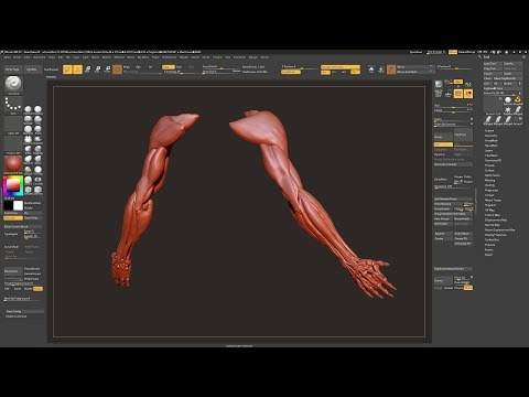 Sculpting Arm and Hand Muscles in ZBrush