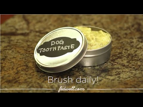 DIY Doggy Toothpaste